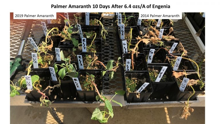 http://news.utcrops.com/wp-content/uploads/2019/07/palmer-screen-025-768x432.jpg